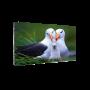 Светодиодный экран для видеостены Dahua PHSA1.6-SH